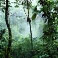 The Congo Basin is rich in forests and poor in cash, which makes it hard to resist offers of easy money from loggers.  Carbon credits could, in theory, help save […]
