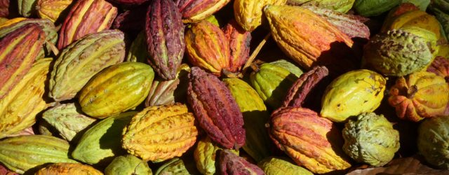 Rising interest in the origins of chocolate is helping cocoa producers gain a bigger slice of the sector's mega profits. Read the full story here. Published in The Guardian, 4 […]